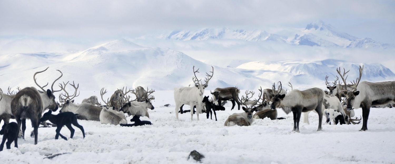 Ассоциация учителей родных языков, литературы и культуры коренных малочисленных народов Севера Камчатского края